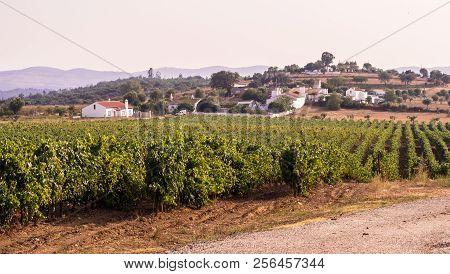 Landscape With Vineyards Around Estremoz, Evora Distric, Portugal.