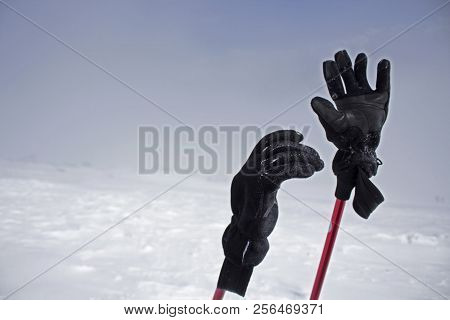 Pair Of Gloves Wearing On Trekking Sticks