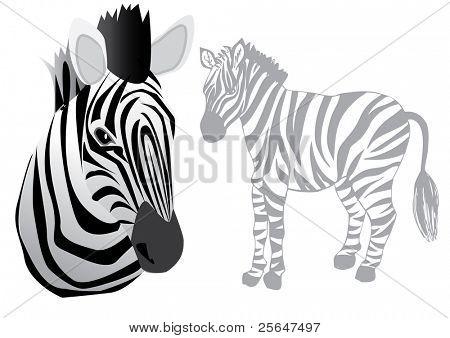 funny vector zebra