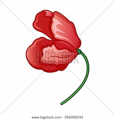 Wild Poppy Flower Icon. Cartoon Of Wild Poppy Flower Vector Icon For Web Design Isolated On White Ba