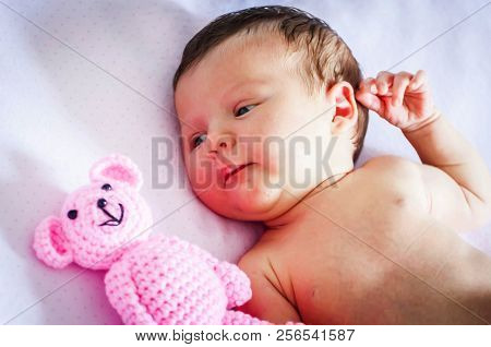 Cute Newborn Baby Girl Lying In The Cradle And Looking At A Pink Teddy Bear. Several Weeks Old Infan