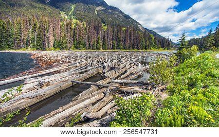 Driftwood In Majestic Mountain Lake British Columbia Canada