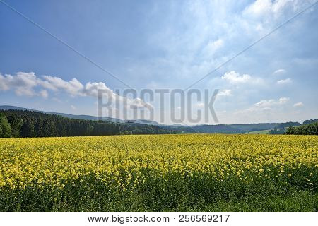 Hdr Summer Landscape With Rape Field And Mountains