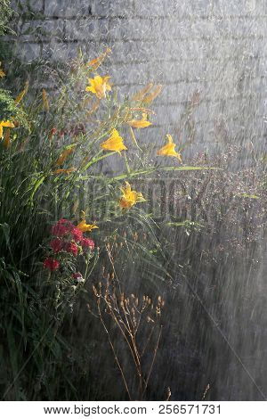 Watering Flowers In Garden. Woman Gardener Watering Plants In Summer Garden. Close Up Of Beautiful Y