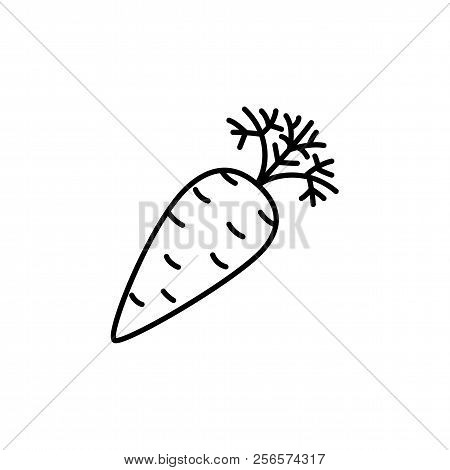 Black & White Vector Illustration Of Carrot Vegetable. Line Icon Of Fresh Organic Carrot Root With L