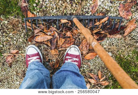 Garden cleaning - rake, legs in sneakers and leaves poster