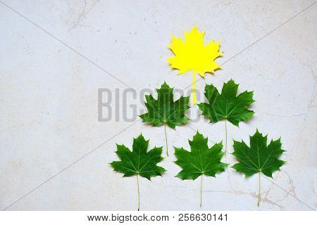 Paper Maple Leaf And Green Leafs. Leadership Concept On White Background.