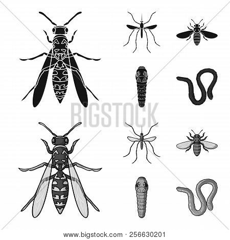 Worm, Centipede, Wasp, Bee, Hornet .insects Set Collection Icons In Black, Monochrome Style Vector S