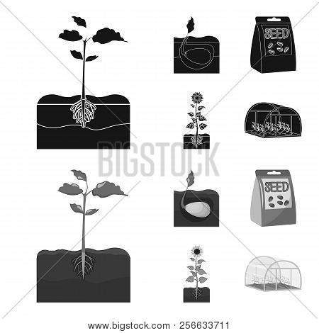 Company, Ecology, And Other Web Icon In Black, Monochrome Style. Husks, Fines, Garden Icons In Set C