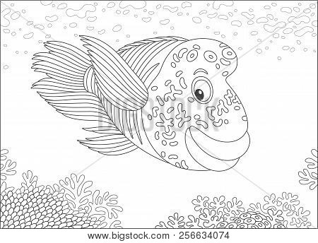 Large Humphead Wrasse Swimming Over A Coral Reef In A Tropical Sea, Black And White Vector Illustrat
