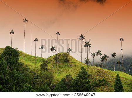 Cloudy landscape of Cocora valley, Salento, Colombia, South America
