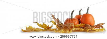 Pumpkins and fall yellow maple leaves isolated on white background