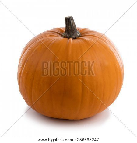 One orange pumpkin isolated on white background, Halloween concept