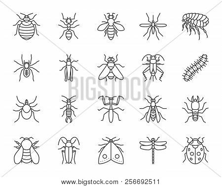 Danger Insect Thin Line Icons Set. Outline Sign Kit Of Bugs. Beetle Linear Icon Collection Of Dragon