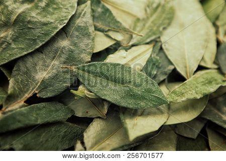 sorting dried coca leafs in a small woven basket, Santa Cruz de la Sierra, Bolivia poster