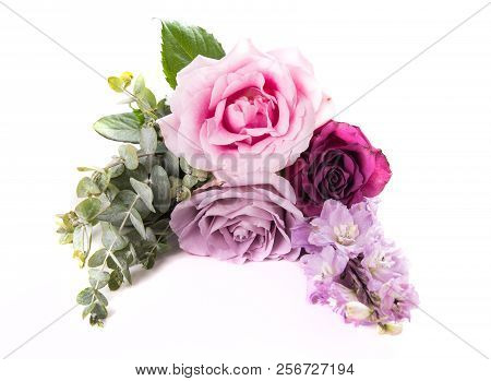 Pink And Purple Roses With Leaves Isolated On White Background