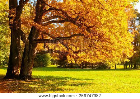Autumn picturesque landscape. Autumn trees with yellowed foliage in sunny autumn October park lit by sunshine. Colorful autumn landscape in vivid tones. Autumn park sunny landscape, autumn trees in sunlight