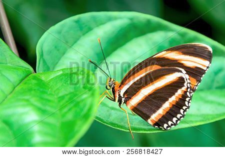 Beautiful Butterfly Perched On A Leaf In A Garden