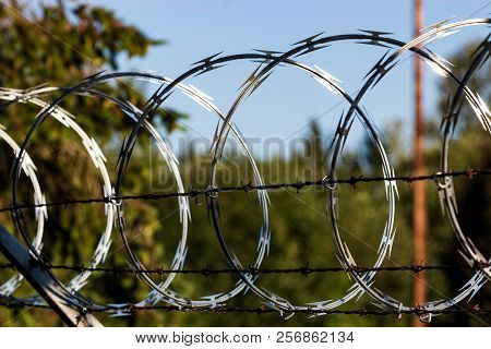 Razor Wire Fence Shining In The Sun With Trees In The Background