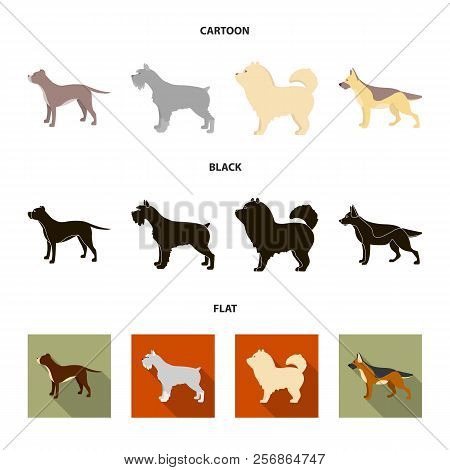Pit Bull, German Shepherd, Chow Chow, Schnauzer. Dog Breeds Set Collection Icons In Cartoon, Black,