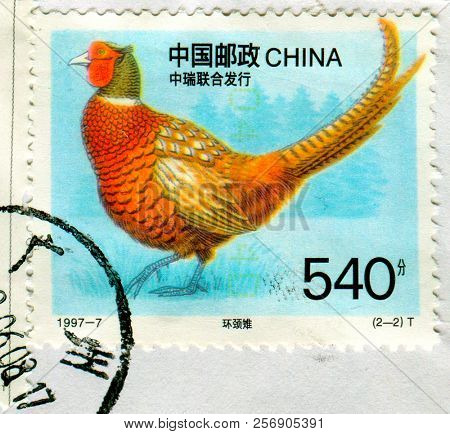 GOMEL, BELARUS, 27 AUGUST 2018, Stamp printed in China shows image of the Capercaillie, circa 1997.