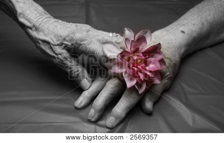 Old Hands Holding A Flower