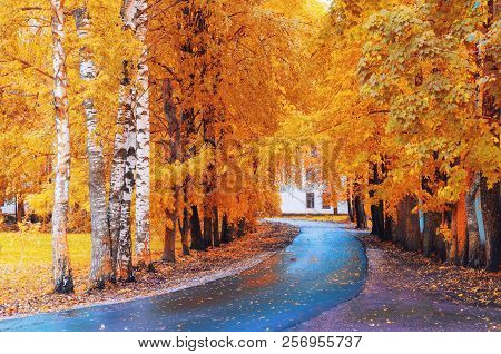 Fall landscape. Yellow fall trees and fall leaves on the wet footpath in park fall alley after rain. Colorful fall landscape scene, fall alley in cloudy fall weather