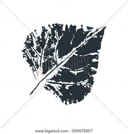 Vector Poplar Leaf Print. Inkprinted Leaves Of The Trees On Paper