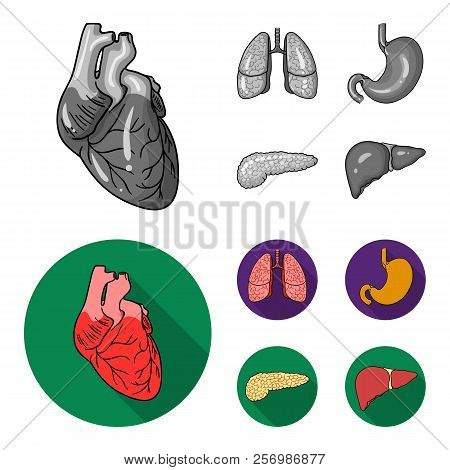 Heart, Lungs, Stomach, Pancreas. Human Organs Set Collection Icons In Monochrome, Flat Style Vector