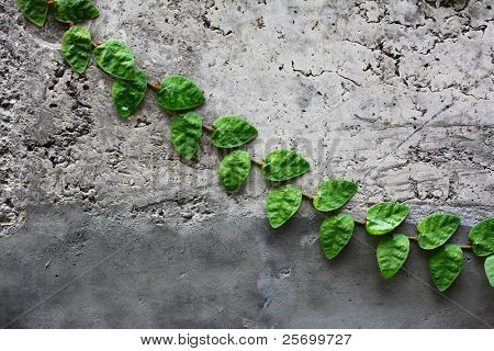 Gray wall with green leaves