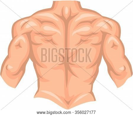 Naked Back Of Bodybuilder Male With Muscle