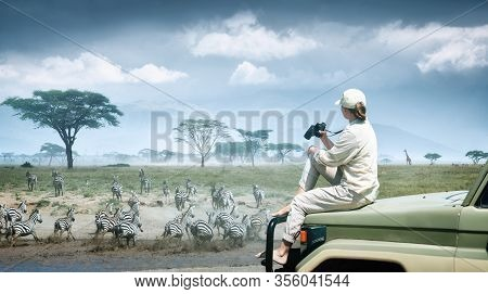 Woman Tourist On Safari In Africa, Traveling By Car In Kenya And Tanzania, Watching Zebras And Antel