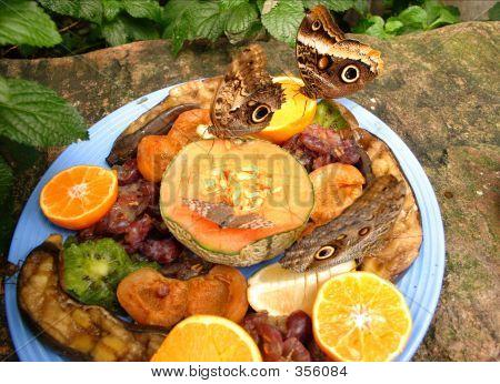 Hungry Butterflies