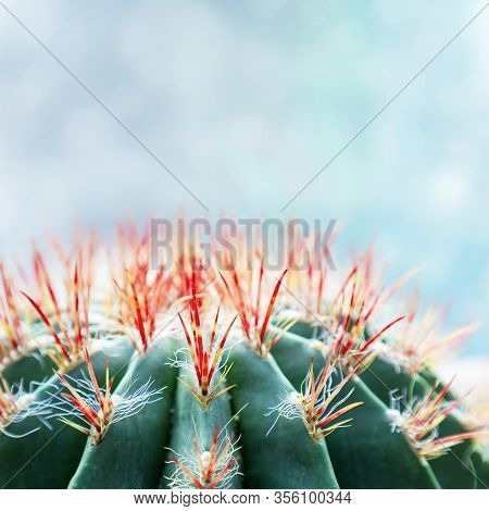 Prickly Cactus Closeup Against Soft Blue Sky. Spiny Succulent Plant Background With With Copy Space.