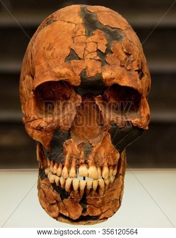 Tblissi  Georgia 09 08 19: Skull Of Homo Sapiens Is The Only Extant Human Species. The Name Is Latin