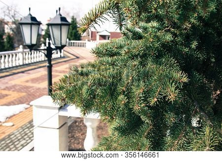 A Green Spruce Branch In The Foreground And A Black Double Street Lamp In The Background. Part Of A