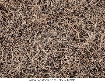 Dry Yellow Grass Hay Texture Grass Backround, Grass Surface