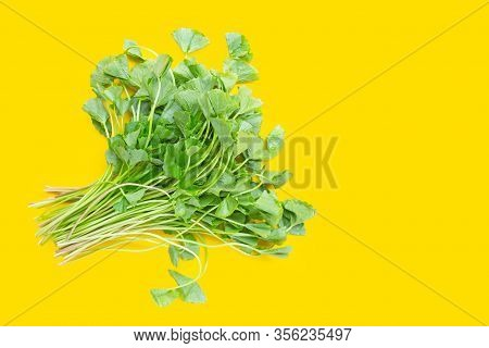 Gotu Kola Leaves On Yellow Background. Copy Space