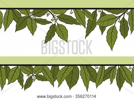 Seamless Floral Pattern With Green Laurel Bay Leaf Isolated On White Background. Vector