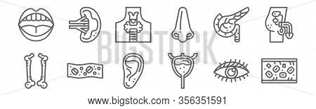 Set Of 12 Human Organ Icons. Outline Thin Line Icons Such As Blood, Bladder, Cells, Pancreas, Thyroi