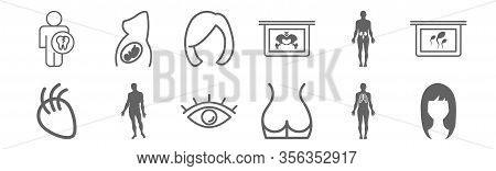 Set Of 12 Body Parts Icons. Outline Thin Line Icons Such As Woman Dark Long Hair Shape, Back Part Of