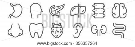 Set Of 12 Human Organs Icons. Outline Thin Line Icons Such As Intestine, Ear, Tooth, Spine, Pancreas