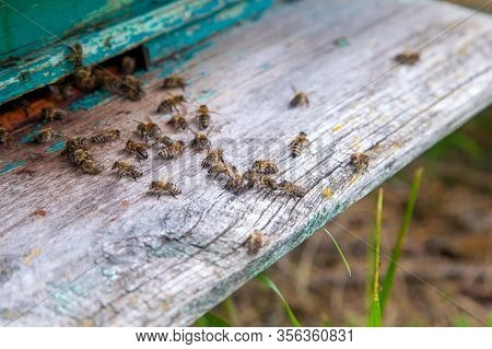 Swarming Bees At The Entrance Of Old Beehive In Apiary..