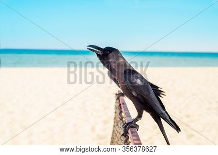 Blue Sky, Blue Sand On The Coast Of Egypt Or Turkey. Wicker Umbrella. Sea Holidays And Tourism.grey