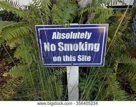 Blue Absolutely No Smoking Sign With Lizard And Green Plants