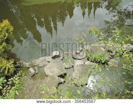 The Red-eared Slider Trachemys Scripta Elegans , Two Turtles On The Rock