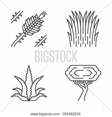Desert Plants Linear Icons Set. Exotic Flora. Ocotillo, Mexican Thread Grass, Aloe Vera, Palo Verde