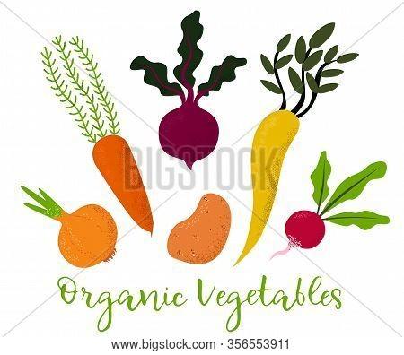 Set Of Vegetables.beet, Celery, Potato, Radish, Carrots And Onion. Isolated On White.