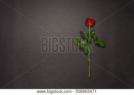 Single Rose Flower On Black Background. Mourning, Condolence, Commemoration Concept. Mourning Card W
