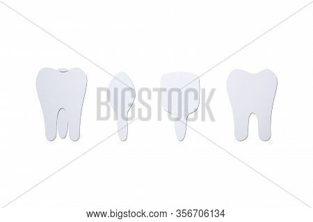 Type Of Tooth ( Incisor, Canine, Premolar, Molar ) - Dental Cartoon Paper Cut Style Cute Character F